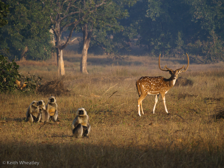 Bandhavgarh India